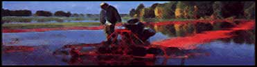 Oregon Cranberry Company - Sweet and Dried Cranberries, cranberry seed oil, gifts, tours and more.